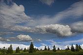 Hautes chaumes du Gazon du Faing au printemps, Parc naturel régional des Ballons des Vosges, France