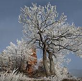 Piton rocheux en grès de Windstein et chênes givrés, Parc naturel régional des Vosges du Nord, France