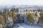 Snow-covered Northern Vosges summits, Northern Vosges Regional Nature Park, France