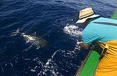 Artisanal and selective tuna fishing (Thunnus obesus). Atlantic Ocean, Makaronesia. Island of Tenerife. Canary Islands.