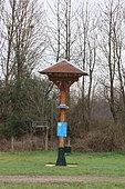 House Martin (Delichon urbicum), Nesting box, Ecopole du Forez, Rhône-Alpes, France