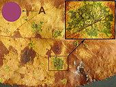 Macrographie de feuille de pommier atteinte par Diplodia seriata (Botryophaeria obtusa), avec taches arondies oranges à pourpres. A : Réréfence de Couleur pourpre. A droite: détail de la tache avec le réseau de filaments. St Génis des Fontaine; le 30 juillet 2020.