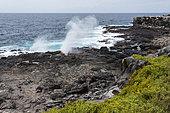 Punta Suarez, Espanola Island, Galapagos islands, Ecuador.