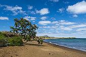 Floreana Island, Galapagos islands, Ecuador.