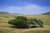 Landscape on Carcass Island, Falkland Islands, Great Britain, South America