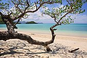 Sandy beach with tree, Ilot Choizil, Mayotte, Africa
