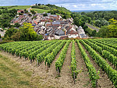 Winemaking village of Les Loges, production of Pouilly fumé wine, Nièvre, Loire Valley, France