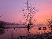 A few minutes before sunrise on the Loire River, France