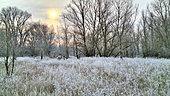 Paysage hivernal d'une île de la Loire, île des barreaux en hiver par -6°C en janvier, France