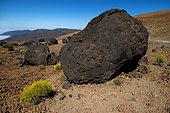 """Boules de lave appelées """"Huevos del Teide"""", Montaña Blanca. Parc national du Teide, Tenerife, îles Canaries."""