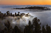 Teide National Park, Tenerife. Sea of clouds, south of the island. It is caused by the trade winds, which push the clouds against the summit, usually forming between 800 and 1000 meters of altitude. Canary Islands.