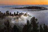 Parc national du Teide, Mer de nuages, au sud de l'île, causée par les alizés, qui poussent les nuages contre le sommet, se formant généralement entre 800 et 1000 mètres d'altitude, Tenerife, Îles Canaries.