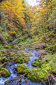 Bruyant torrent, rushing through a deciduous forest, in the Vercors Regional Natural Park, Isère, France