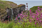 Fowlsheugh cliff and waterfall, RSPB reserve, Scotland.