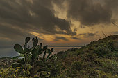 Prickly pear cactus and sunset from Cap Norfeu, Catalonia, Spain