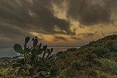 """""""Cactus raquette"""" et coucher de soleil depuis le Cap Norfeu, Catalogne, Espagne"""