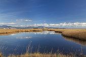 Marshes of the Aiguamolls, Catalonia, Spain