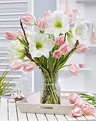 Hippeastrum spring combination