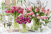 Tulipa bouquets