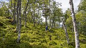 Hiker on trail in forest towards Innerdalen, Hochtal, Sunndal, Møre og Romsdal, Vestlandet, Norway, Europe