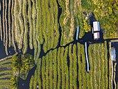 Aerial of the swimming gardens, Inle lake, Shan state, Myanmar, Nyaungshwe Township, Shan State, Myanmar, Asia