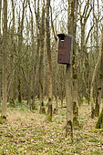 Tawny owl (Strix aluco) nestbox, England