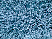 Snowy forest seen by drone, Ardennes, Belgium