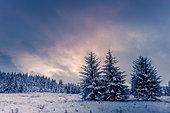 Snowy forest, Ardennes, Belgium