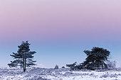 Paysage fagnard sous la neige, Ardennes, Belgique