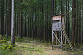 Hunting blind in spruce forest, Spessart, Hesse, Germany, Europe
