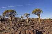 Giant Playground, dolerite boulders, Gariganus farm, Keetmanshoop, Karas region, Namibia, Africa
