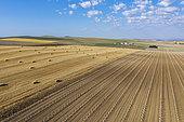 Bottes de paille dans un champ après la récolte du blé et jeunes oliviers cultivés (Olea europaea) dans la Campiña Cordobesa, zone rurale fertile au sud de la ville de Cordoue. Vue aérienne. Vue par drone. Province de Cordoue, Andalousie, Espagne.
