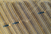 Bales of straw and abstract patterns in cornfield after wheat harvest. Prominent the tractor wheel ruts. In the Campiña Cordobesa, the fertile rural area south of the town of Córdoba. Aerial view. Drone shot. Córdoba province, Andalusia, Spain.