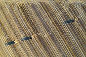 Bottes de paille et motifs abstraits dans un champ après la récolte du blé. Les traces des roues du traceur sont bien visible. Dans la Campiña Cordobesa, la zone rurale fertile au sud de la ville de Cordoue. Vue aérienne. Prise de vue par drone. Province de Cordoue, Andalousie, Espagne.