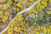 Sweet chestnut trees (Castanea sativa) in autumnal colours in November. Aerial view. Drone shot. Genal river valley, Málaga province, Andalusia, Spain.