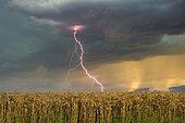 Thunderstorm over wheat field, Todi, Perugia Province, Umbria, Italy, Europe