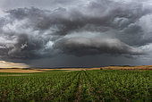 Thunderstorm near Soria in Spain. Violent thunderstorm crossing central Spain in the middle of the afternoon taken from the fields. An arcus quickly formed followed by a strong wind.