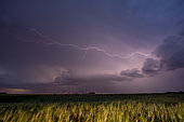 Spring thunderstorms in the Eurelian region. Numerous thunderstorms developed in the evening of June 3 in the south of the Eure et Loir. Many positive lightning bolts were observed. Lightning crawling under the anvil of the thunderstorm, called internuageous. Centre-Val de France