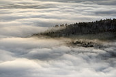 Sea of clouds in the Vosges. In December 2019, temperatures reaching 10 degrees at altitude and negative on the ground favoured the formation of low clouds, known as stratus, in the Alsace plain. This sea of clouds was photographed from the heights of the Haut-Koenigsbourg castle. Alsace, France