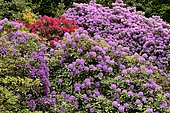 Rhododendron Park Bad Sassendorf, rhododendrons and azaleas in bloom, North Rhine-Westphalia, Germany, Europe