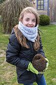 Girl carrying a hedgehog in a garden in spring, Pas de Calais, France
