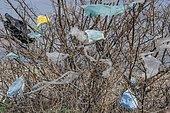 Plastic waste hanging in the branches, pollution, Kuyalnik estuary, Black Sea, Odessa oblast, Ukraine, Europe