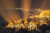 Sunbeams behind trees at sunset, Springtime, Hesse, Germany, Europe
