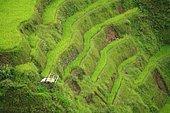 Rice terraces of Banaue, Luzon, Philippines, Asia