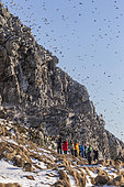 Photographers and Common murre or common guillemot (Uria aalge), group in the cliffs, protected island with large colonies of seabirds, Island of Hornøya, Vardø or Vardo, Varanger Fjord, Norway, Scandinavia,