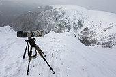 Camera shooting Alpine Chamois (Rupicapra rupicapra), Vosges, France