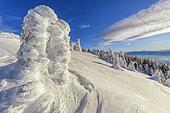 The Jura ridges in the heart of winter, Massif du Grand Crêt d'Eau, National Nature Reserve of the Haute Chaîne du Jura, France