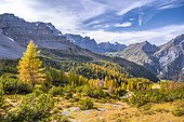 Yellow larches in autumn, mountains and mountain valleys, peaks from left to right Lamsenspitze, Schafkarspitze, Eiskarlspitze, Spitzkarspitze, Sonnjoch, Eng, community Hinterriß, Karwendel Mountains, Alpenpark Karwendel, Tyrol, Austria, Europe