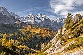 Autumn, yellow larches in front of mountains, summit of the Spitzkarspitze, Eng, Hinterriß municipality, Karwendel mountains, Karwendel Alpine Park, Tyrol, Austria, Europe