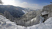 Lynx tracks in the snow in winter, landscape of the Maîche slope, Doubs, Jura, France